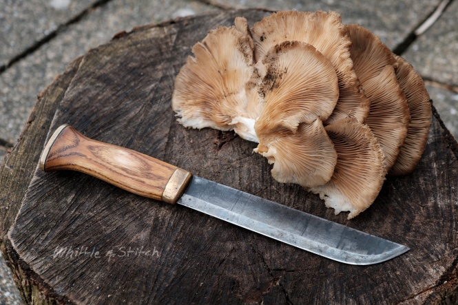 Ash handled Lauri Leuku knife on Elm round next to Oyster fungus handmade crafts foraging bushcraft photograph ©P. Maton whittleandstitch.net